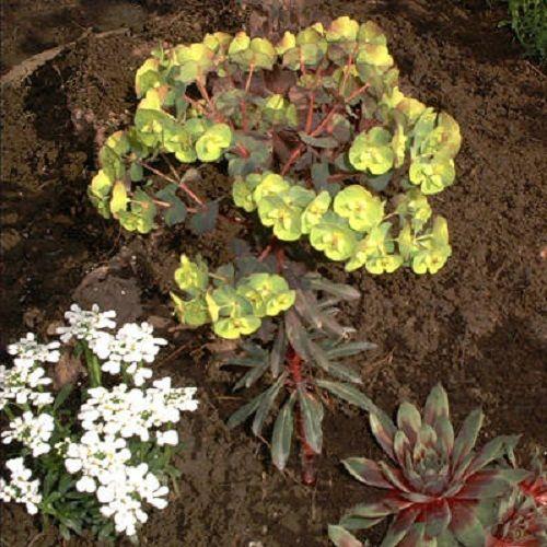 подбор растений для альпийской горки фото