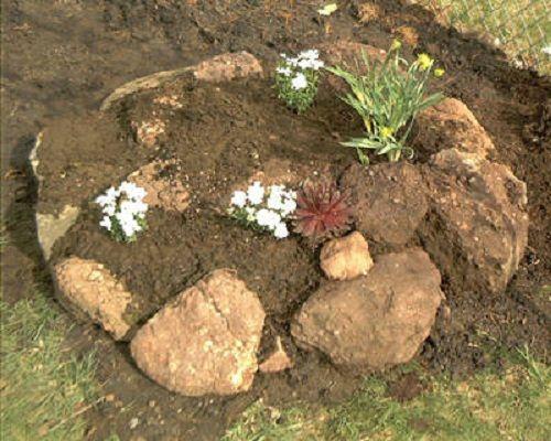 высадка растений фото