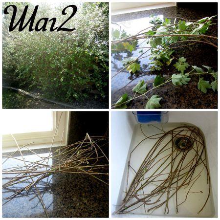 Собираем прутья и подготавливаем их для плетения
