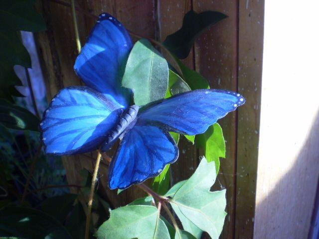 украшаем бабочкой цветок фото