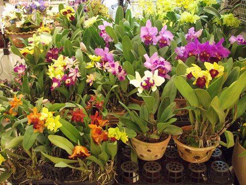 тайские орхидеи фото