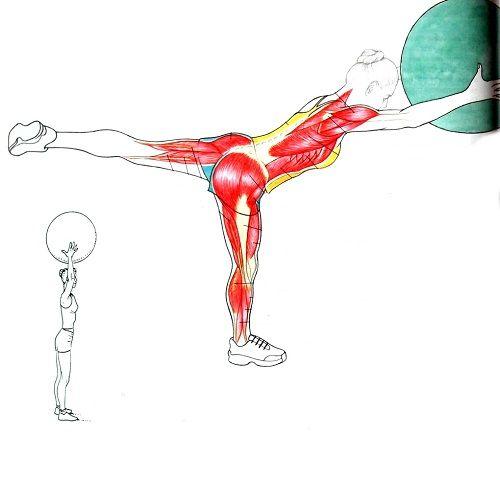 упражнение ласточка с фитболом фото