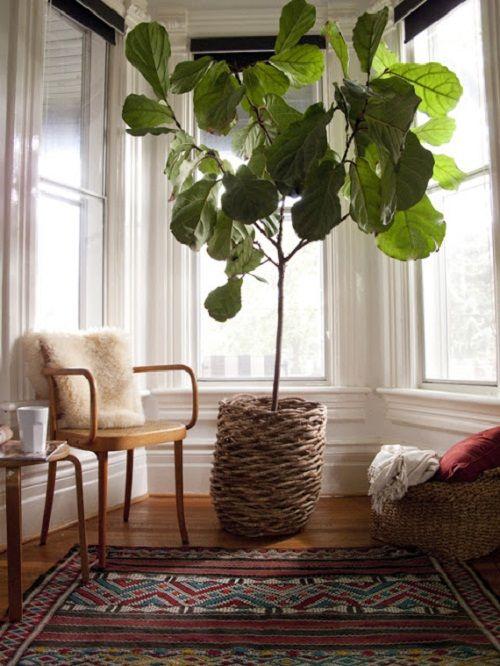 способ размещения растений фото