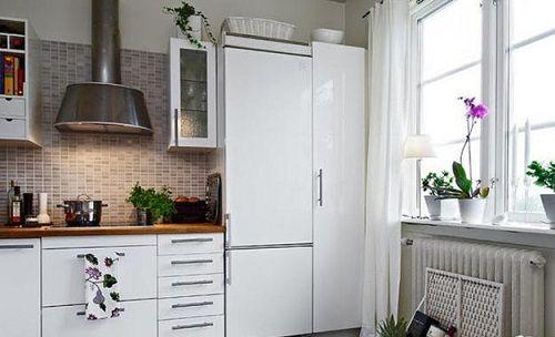 растения на кухне фото