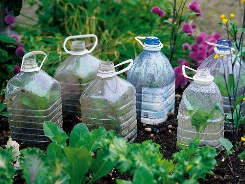 защита растений с помощью пластиковых бутылок фото