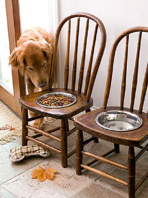 место кормления собаки фото
