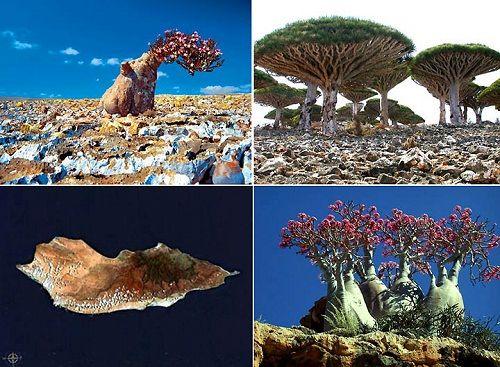 остров Сокотра фото